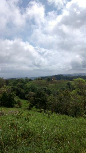 Main image of Property For Sale in Forest, St. Ann, Jamaica
