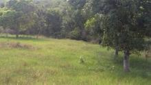 Main image of Jamaican Property For Sale in Malvern, St. Elizabeth, Jamaica